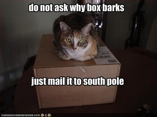 box,do not want,dogs,plotting