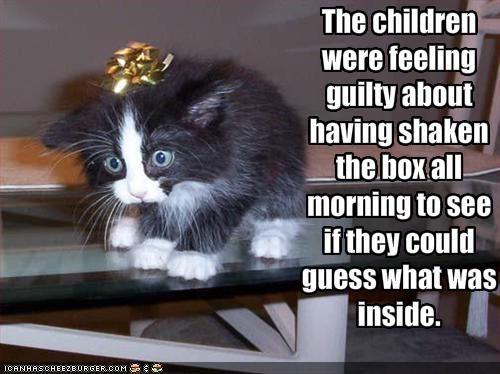 cute gift kitten - 1510012672