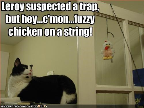 chicken,curious,fuzzy,lolcats,toy,trap