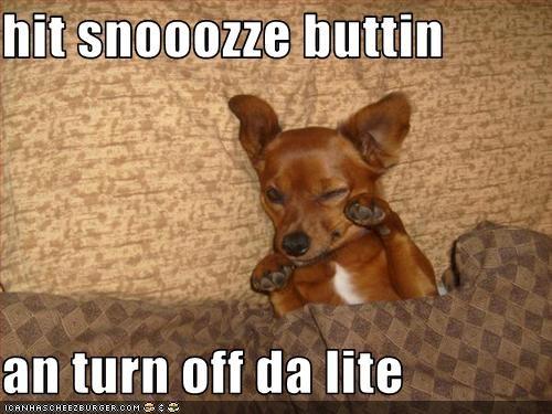 bed dachshund sleeping sleepy snooze - 1510102784