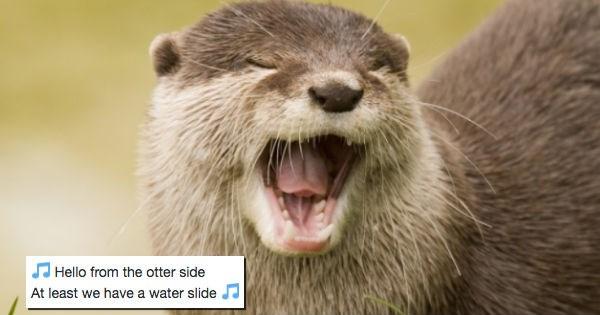 sliding slide snow slippery cute otters otter funny - 1510149