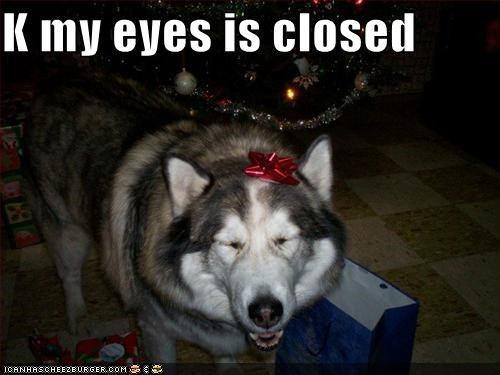 bow husky present - 1510258944