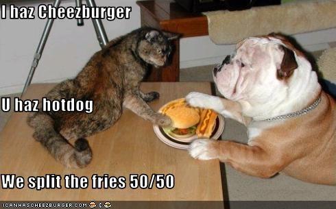 bulldog cheezburger hotdog lolcats sharing - 1510389504