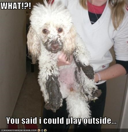 dirty FAIL mud outside poodle - 1513494272