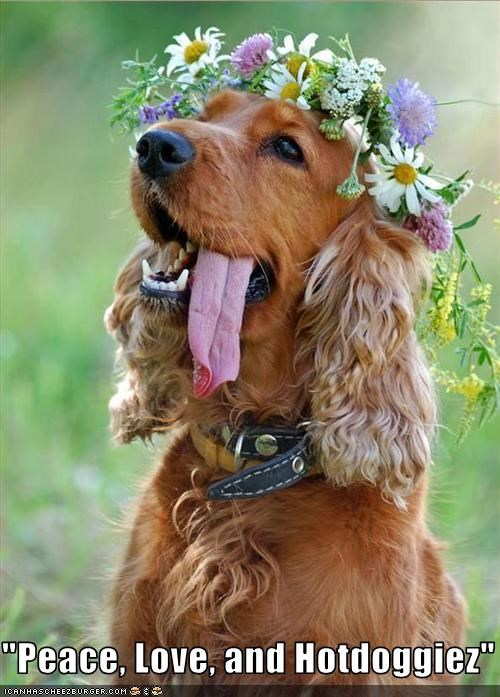flowers,golden retriever,hotdog,love,peace