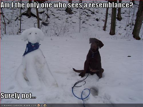 labrador look a like outside snow - 1515220736