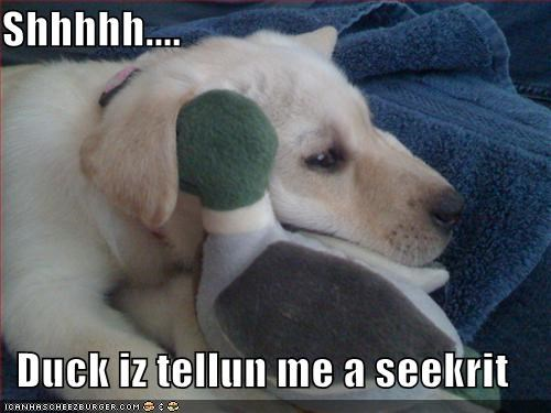 duck,labrador,secrets,stuffed animal,toys