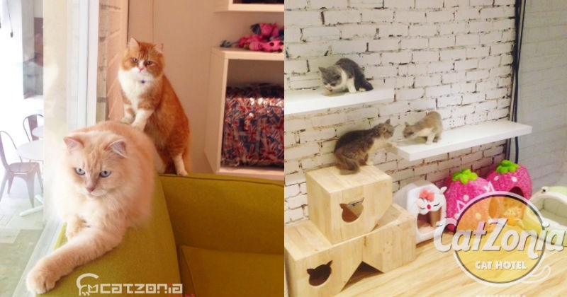 cool fancy hotel pets malaysia Cats - 1519365