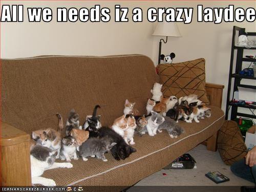 couch crazy cat lady cute kitten lolcats lolkittehs - 1519381760