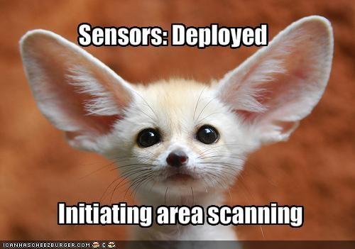 cute ears fennec lolfoxes scan - 1519476480