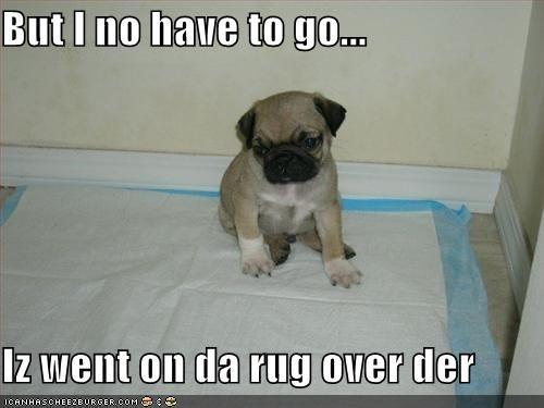 pee pee pads pug rug training - 1519741184