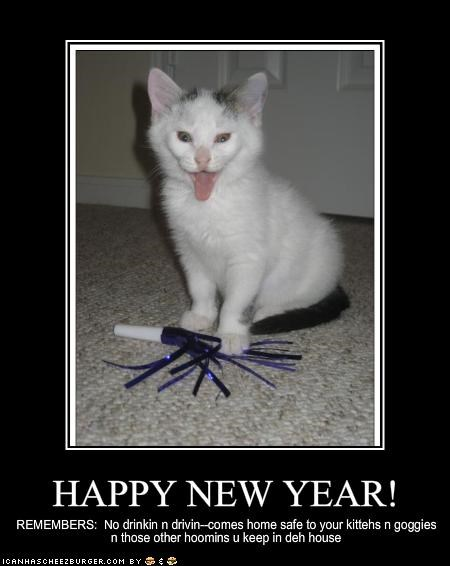 celebration cute excited holiday lols 2010 kitten lolcats lolkittehs new year Party - 1520229632