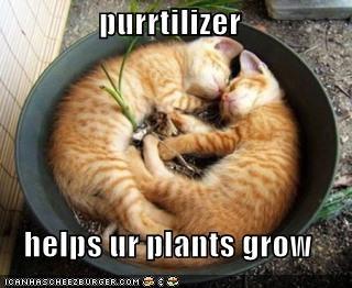 cute,kitten,lolcats,lolkittehs,plant,purr