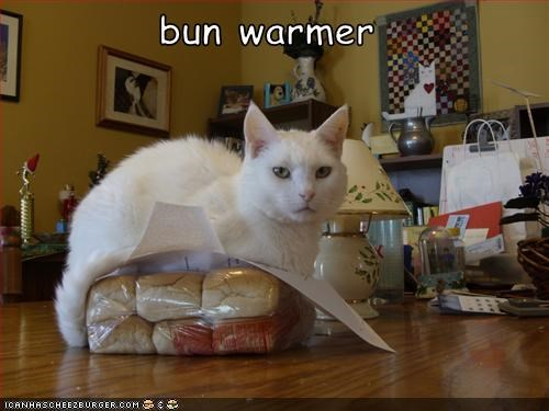 bun warmer helping hotdog lolcats - 1522301184