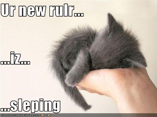 cute handheld kitten lolcats lolkittehs sleeping - 1523085056