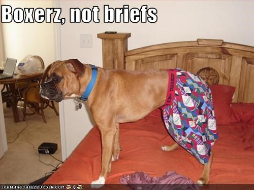 boxer joke underwear - 1524125440