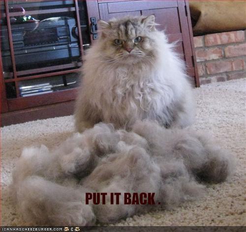 angry fur haircut lolcats upset - 1525757184
