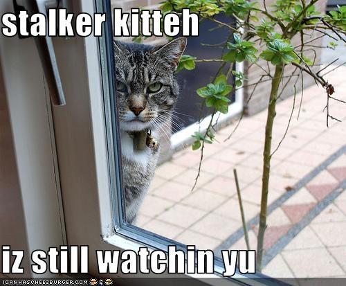 lolcats stalker watching window - 1525964032