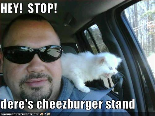 Cheezburger Image 1526497024