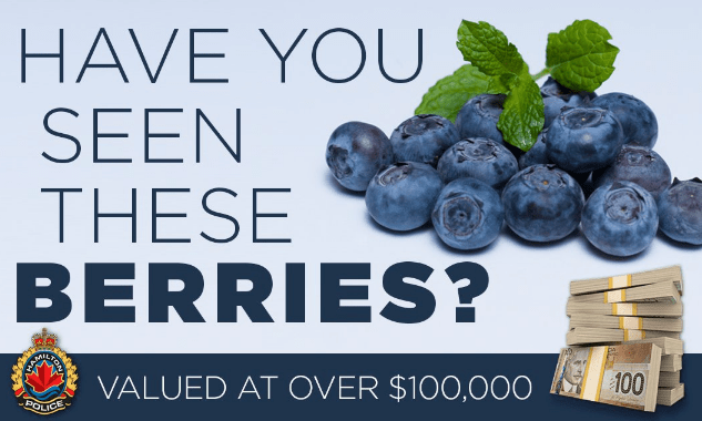 blueberries,news,crime,funny
