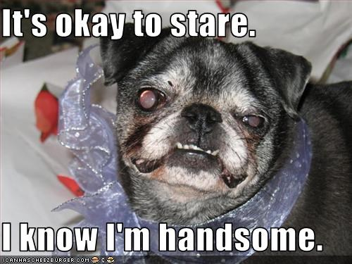 confidence,handsome,pug