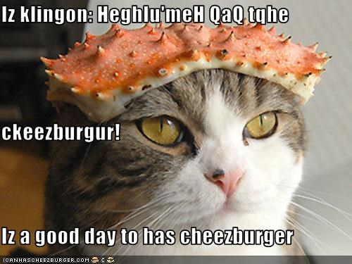 Cheezburger Image 1527283456