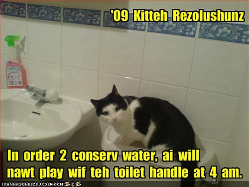 lolcats,new year,play,resolutions,toilet,water