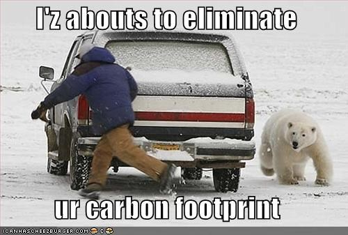 car chasing lolbears murder polar bear threats - 1529385216