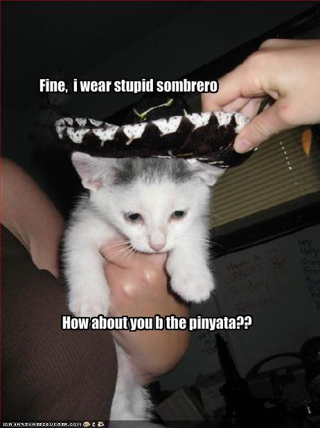 cinco de mayo cute lolkittehs sombrero - 1533155584