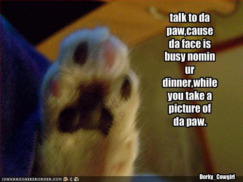 talk to da paw,cause da face is busy nomin ur dinner,while you take a picture of da paw.