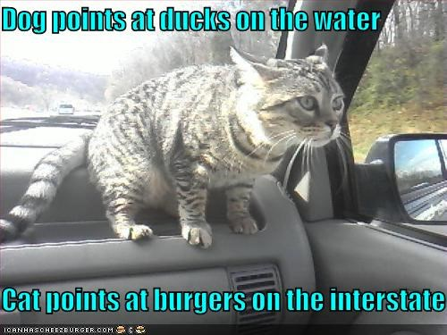 Dog points at ducks on the water Cat points at burgers on
