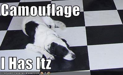 Cheezburger Image 1533826304