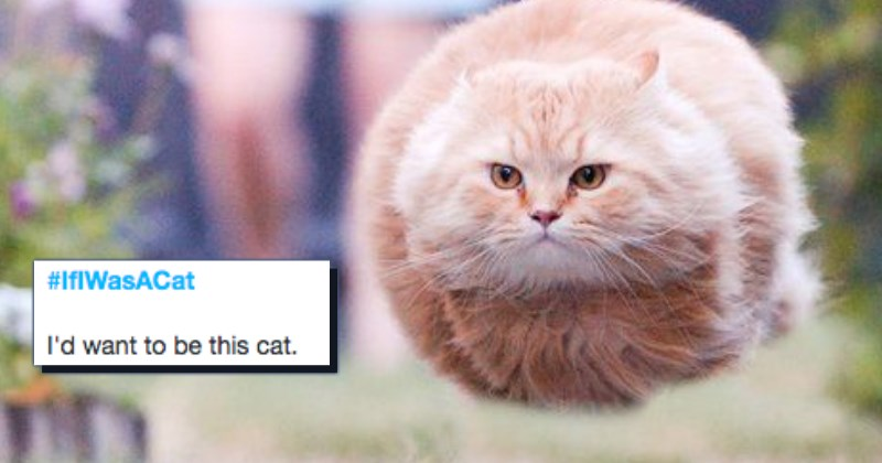 twitter,list,cute,Cats,funny