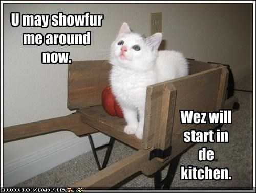 bossy driving hungry kitchen kitten lolcats lolkittehs - 1534816512