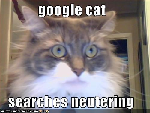 google cat  searches neutering