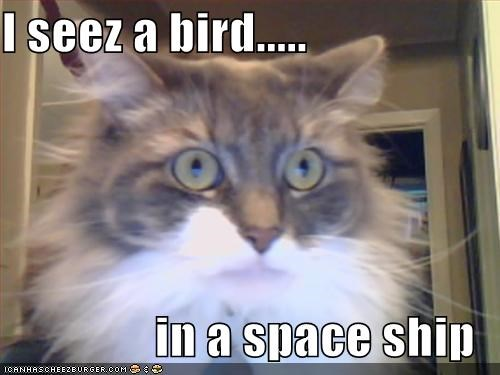 I seez a bird.....  in a space ship