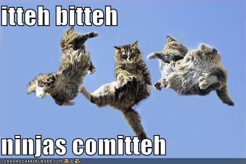 ibkc jumping lolcats ninjas - 1536989952