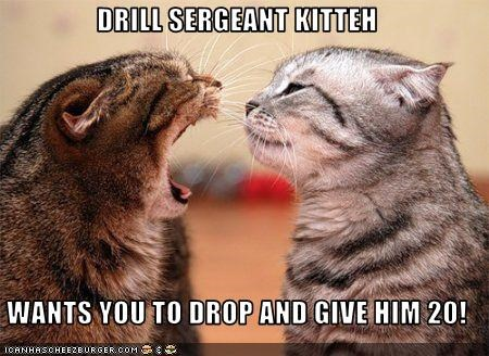DRILL SERGEANT KITTEH  WANTS YOU TO DROP AND GIVE HIM 20!