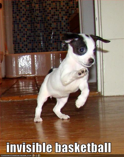 basketball cute invisible jack russel terrier puppy - 1538871040