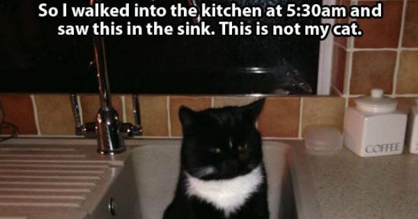 Funny pictures of cats in the house from people who don't have a cat.