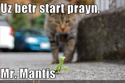 Uz betr start prayn,  Mr. Mantis