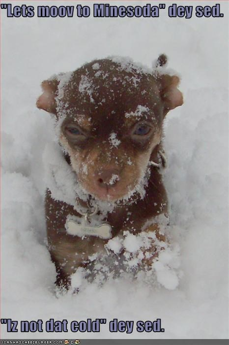 chihuahua cold cute outside puppy snow - 1544042240