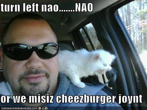 Cheezburger Image 1544328448