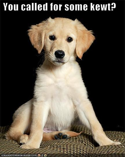 cute golden retriever puppy - 1544702208
