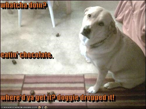 whatcha doin? eatin' chocolate where'd ya get it? doggie dropped it