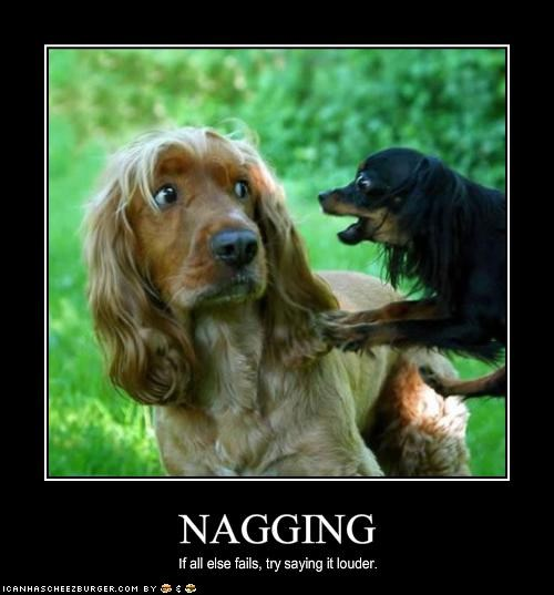 chihuahua cocker spaniel loud nag nagging shouting yelling - 1546154752