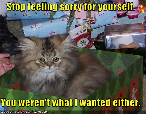 cute do not want kitten lolcats lolkittehs present Sad sorry - 1546931968