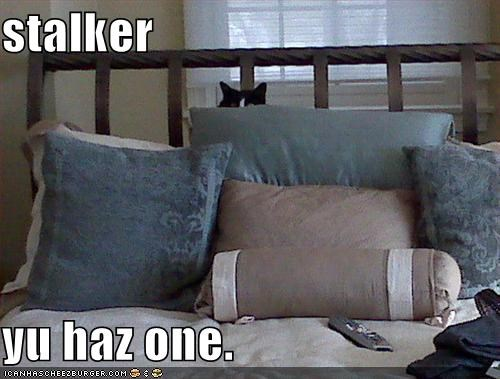 bed hiding lolcats pillows stalker - 1547520768