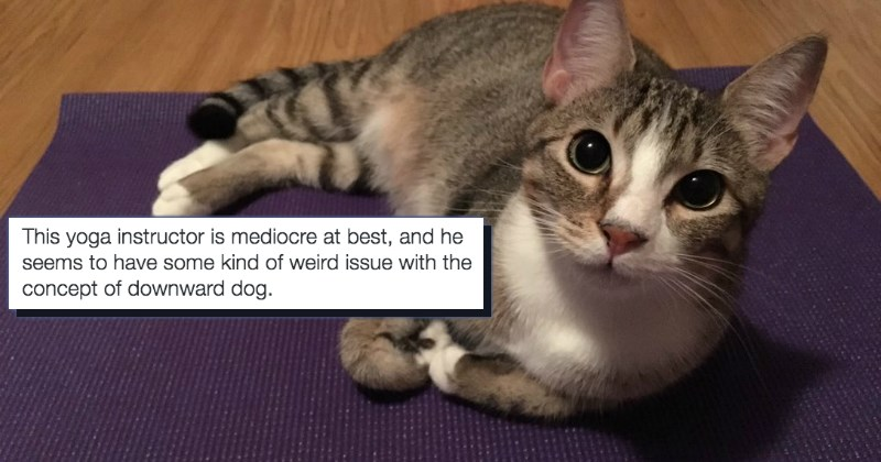 funny animals disrupting interrupting owners from practicing yoga | Jill Baguchinsky @JillBaguchinsky Feb 9 13 This yoga instructor is mediocre at best, and he seems have some kind weird issue with concept downward dog.