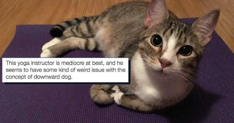 pets list cute animals yoga - 1548037